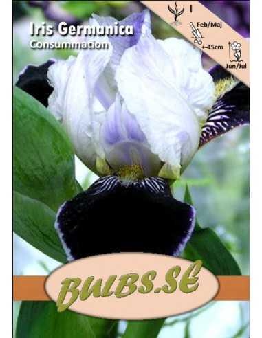 Iris Consummation