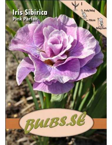 Pink Parfait - Rabattiris