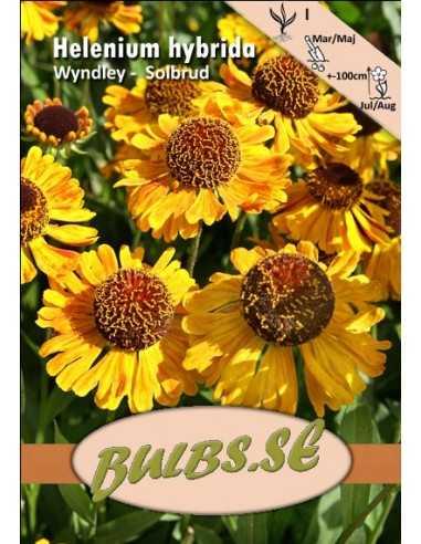 Solbrud - Wyndley