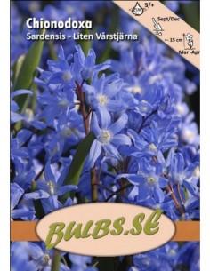 Liten Vårstjärna - Sardensis