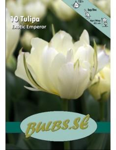 Exotic Emperor - Tulpan Dubbel