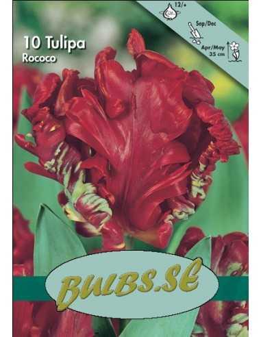 Rococo - Tulpan Papegoj