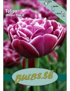 Dream Touch - Tulpan Dubbel