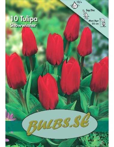 Showwinner - Tulpan Botanisk