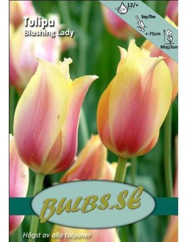 Blushing Lady
