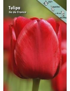 Ile de France - Tulpan Triumph
