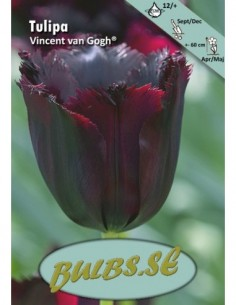 Vincent van Gogh® - Tulpan...