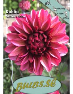 Seniors Hope - Dahlia Diverse