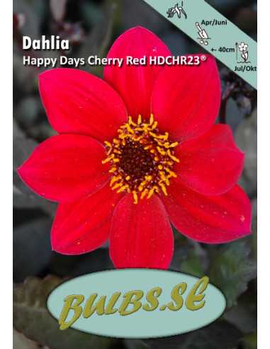 Happy Days Cherry Red HDCHR23®