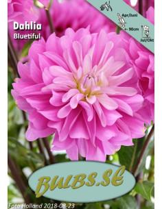 Bluetiful - Dahlia Dekorativ