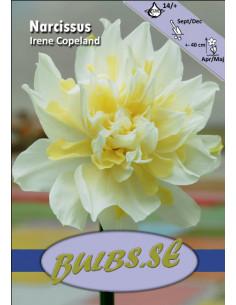 Irene Copeland - Stjärnnarciss