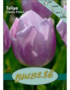 Candy Prince - Tulpan Enkel