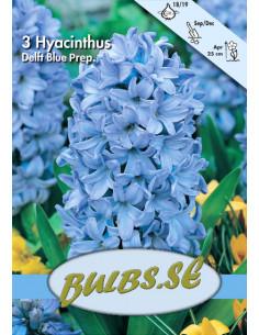 Delft's Blauw - Julhyacint