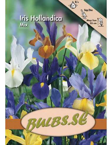 Holländsk Iris - Blandning