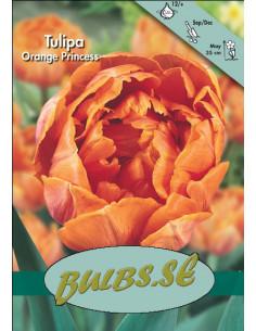 Orange Princess - Tulpan...