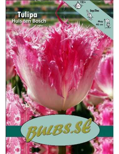 Huis ten Bosch - Tulpan Fransad