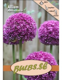 Ambassador ®