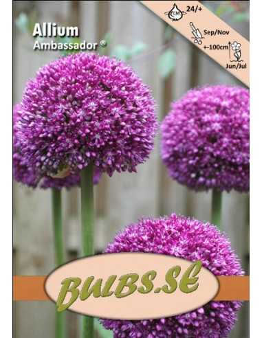 Ambassador ® - Allium