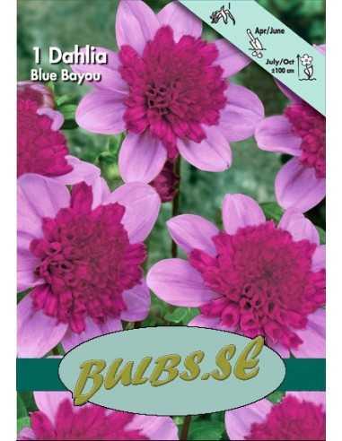 Blue Bayou - Dahlia Anemon