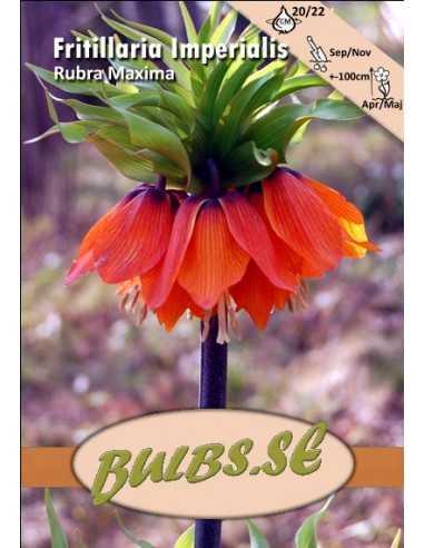 Rubra - Kejsarkrona
