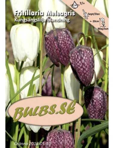 Kungsängslilja - Blandning