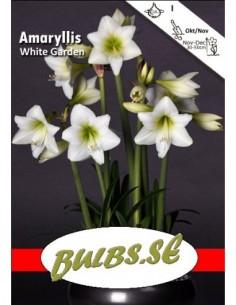 White Garden - Amaryllis...