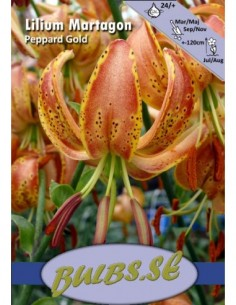 Varjolilja Peppard Gold