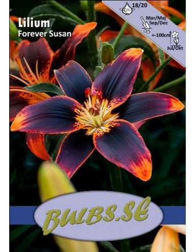 Forever Susan