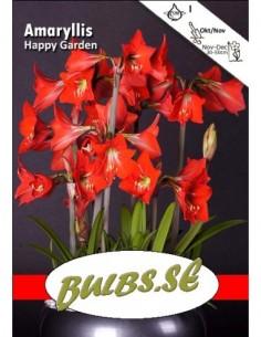 Happy Garden - Amaryllis...