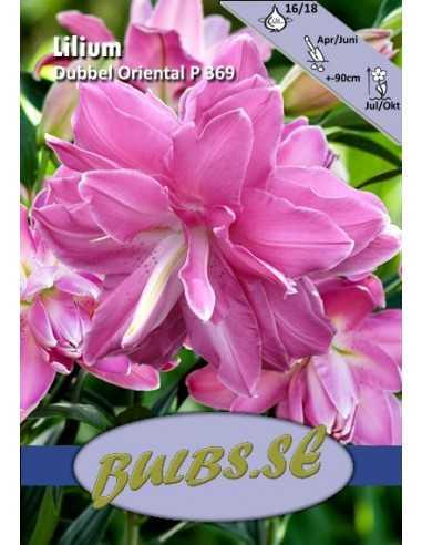Lotus Wonder P369