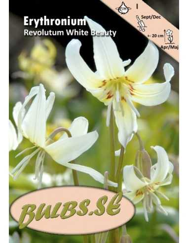 Koiranhammas White Beauty